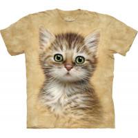 Brown Striped Kitten