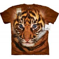 Big Face Sumatran Tiger Cub