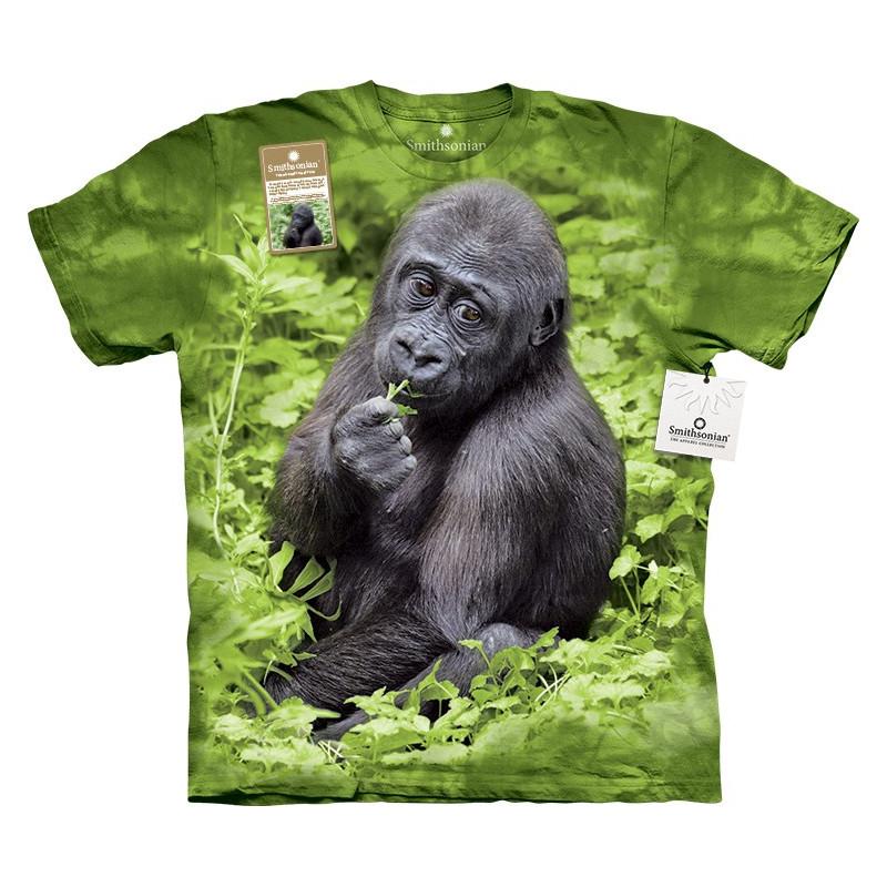 Kojo Western Lowland Gorilla