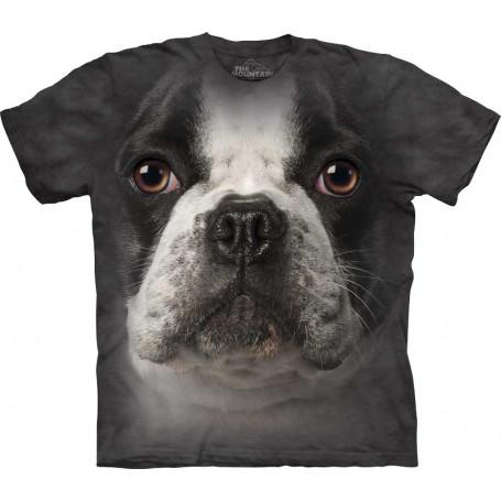 French Bulldog Face